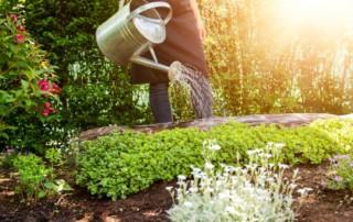 comment protéger les arbres durant la sécheresse - SAINT GERMAIN PAYSAGE