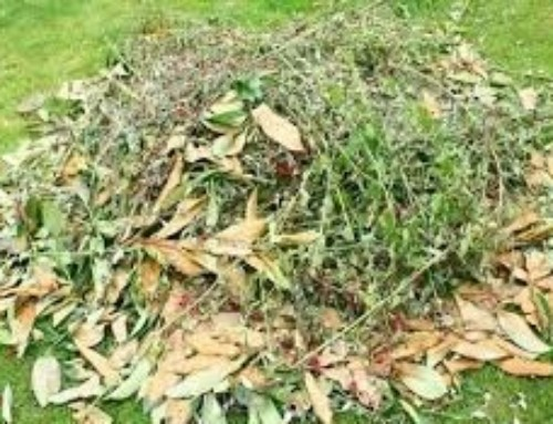 Comment gérer ses Déchets Verts – Les étapes