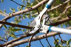 quand tailler les arbres fruitiers - paysagiste 77 elagage seine et marne