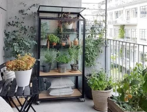 Petit coin de verdure